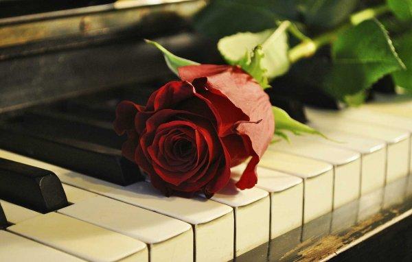 Joy Of Learning Piano