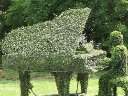 topiary of man playing grand piano