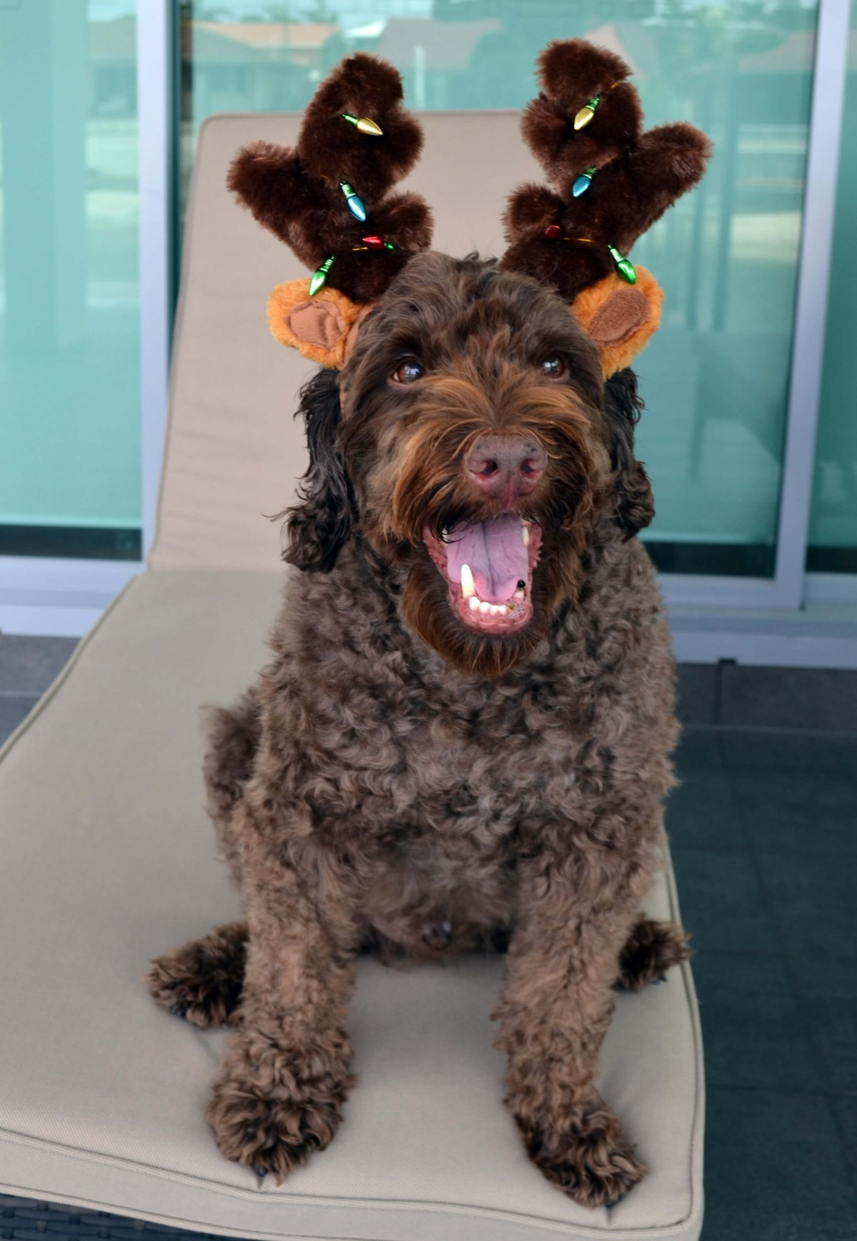 dog dressed as reindeer