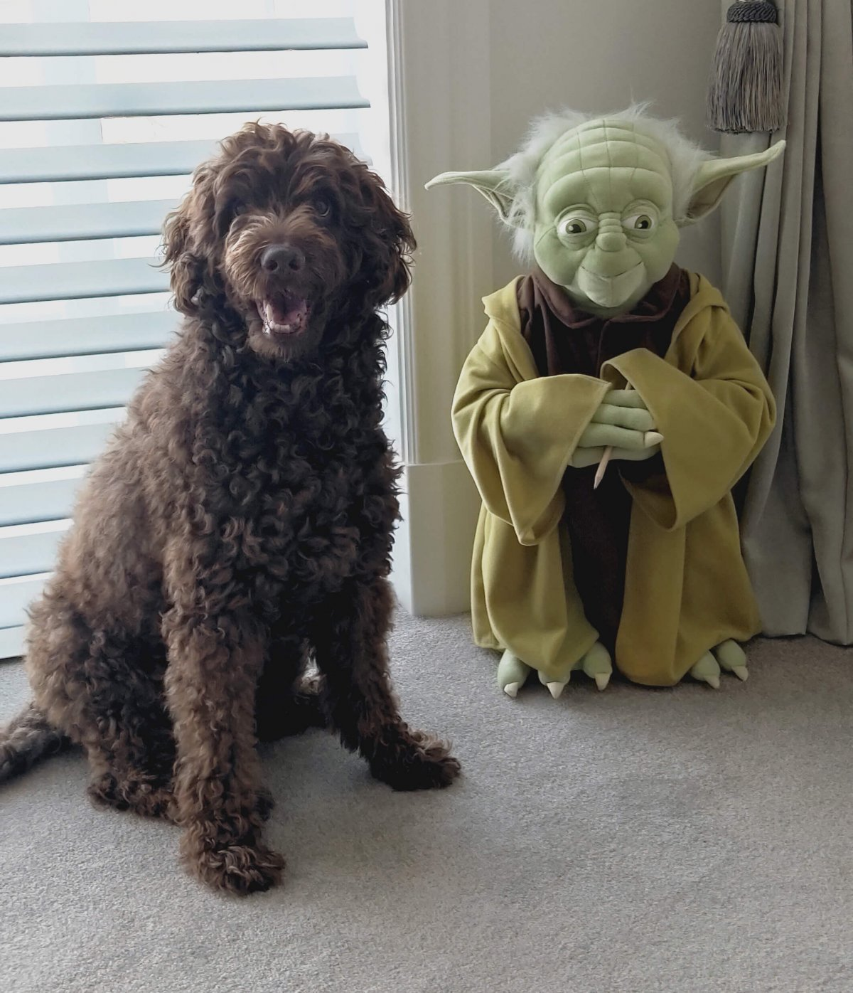Hugo the dog with Yoda