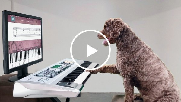 dog playing piano and reading sheet music